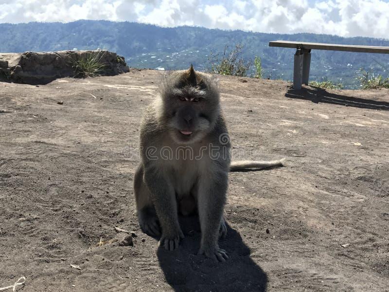 Mono en la montaña fotografía de archivo