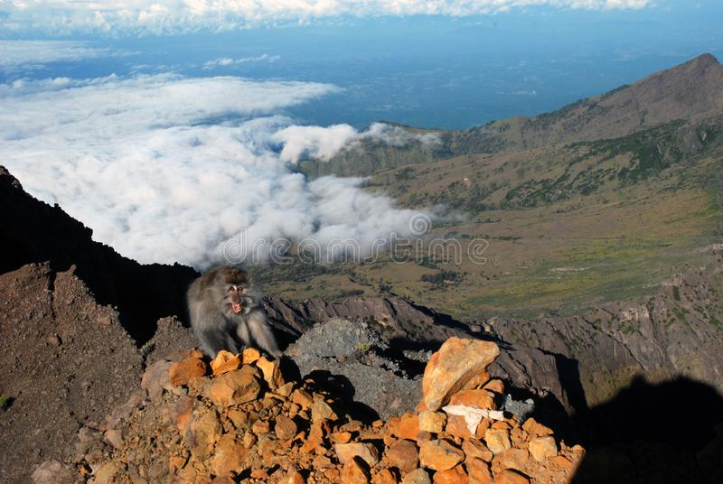 Mono en la montaña máxima de Rinjani fotografía de archivo