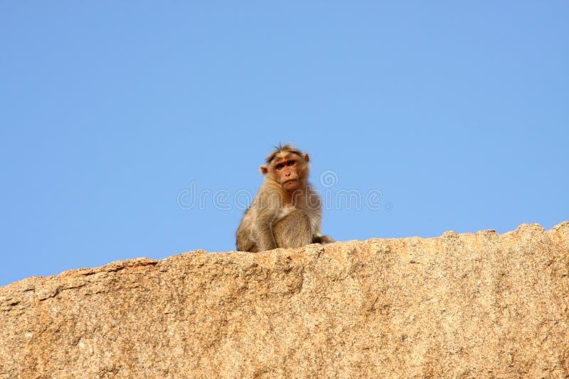 Mono en la roca imágenes de archivo libres de regalías
