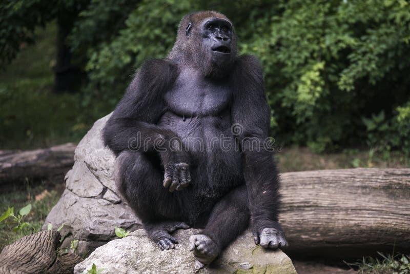 Mono en la selva fotos de archivo libres de regalías