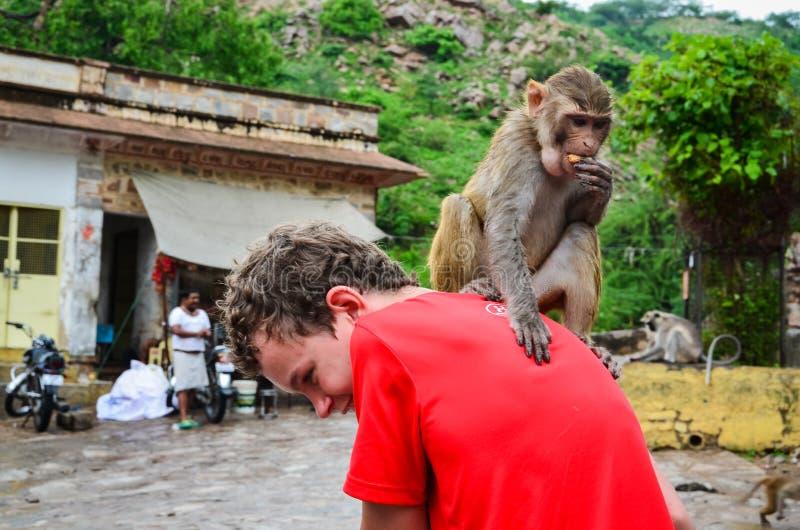 Mono en mi parte posterior fotos de archivo libres de regalías