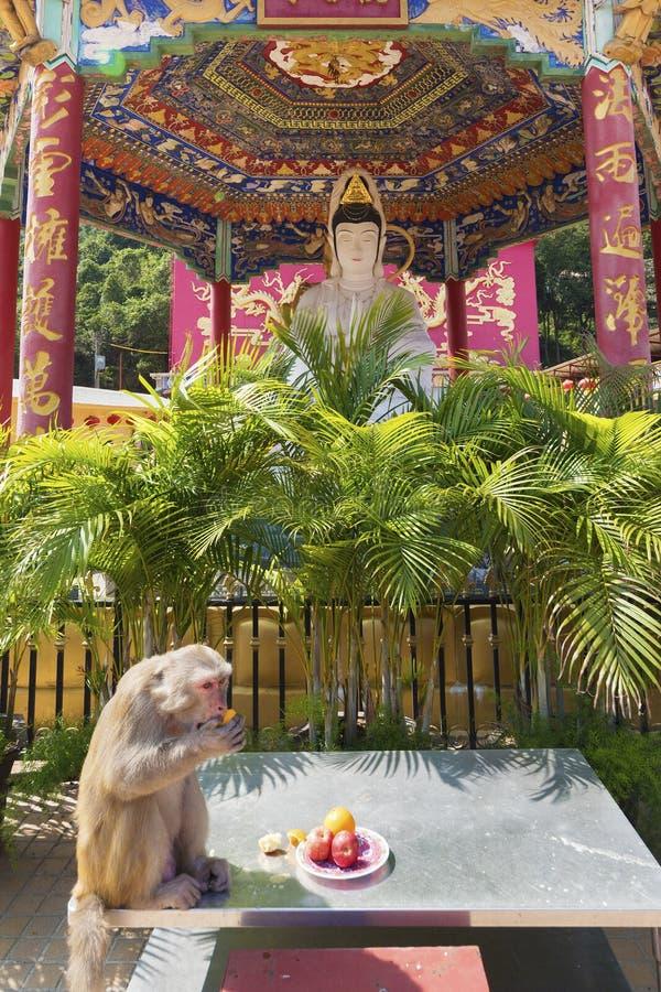 Mono en templo chino en Hong Kong, China imagen de archivo