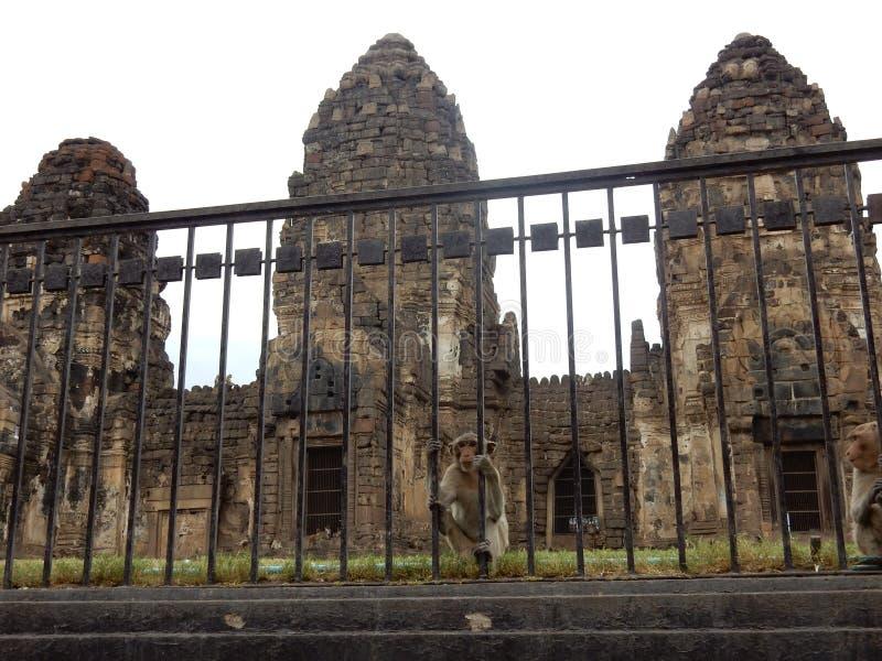 mono en templo del yot de Sam del prang foto de archivo
