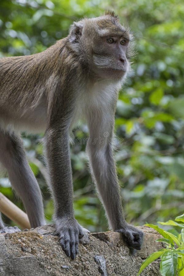 Mono en Tiger Cave Temple, Tailandia imagenes de archivo