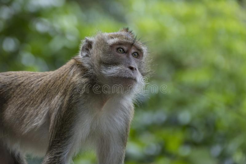 Mono en Tiger Cave Temple, Tailandia imagen de archivo libre de regalías