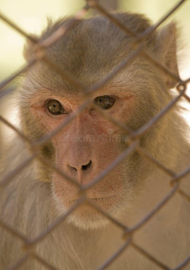 Mono en una jaula fotos de archivo