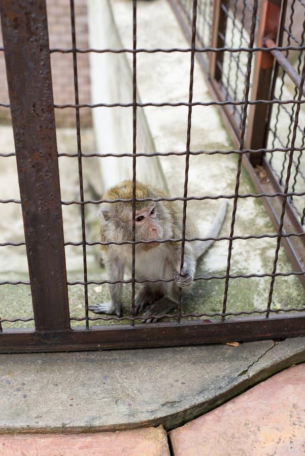 Mono en una jaula de un parque zoológico fotografía de archivo