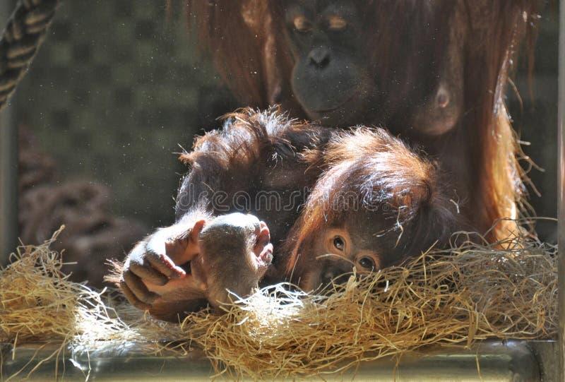 Mono joven con la madre fotografía de archivo