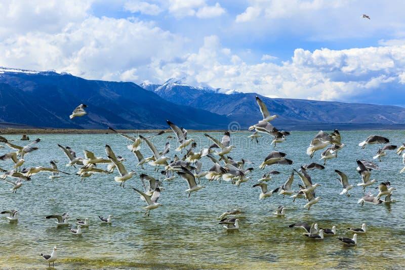 mono Kalifornien lake royaltyfri foto
