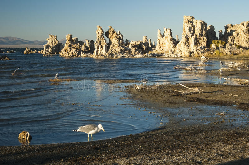 Download Mono Lake stock image. Image of beach, scene, park, environment - 13538041