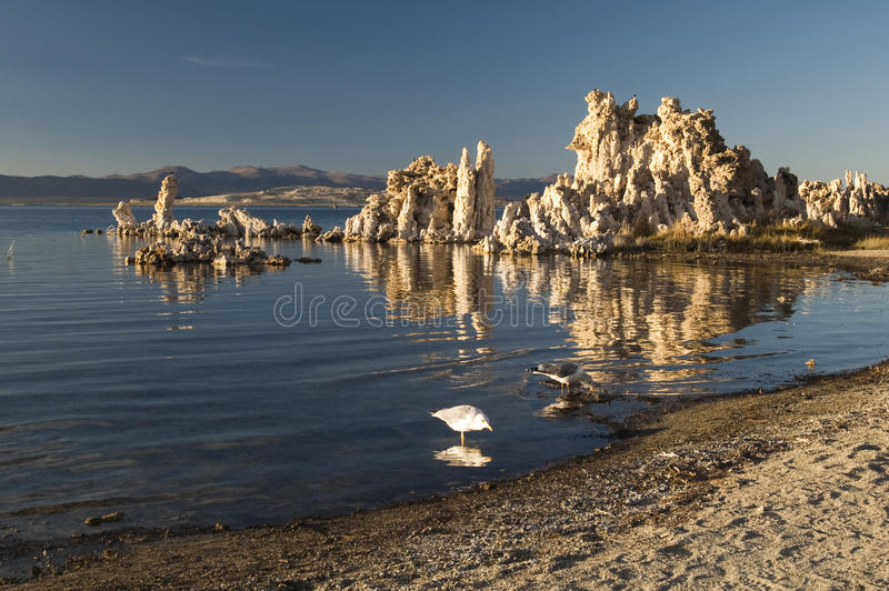 Download Mono Lake stock photo. Image of owens, scenery, beach - 13538046