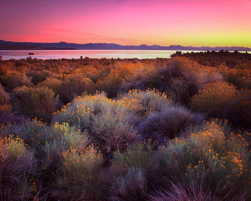 Mono Lake California. Mono Lake is a lake with very high salt content in California royalty free stock images