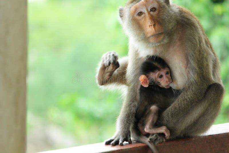 Mono lindo de la mamá imagen de archivo