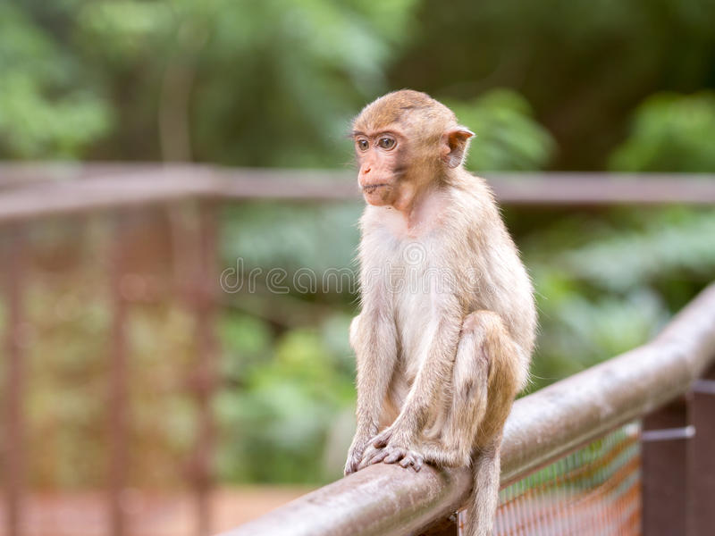 Mono lindo del bebé que se sienta en la cerca y que mira algo fotografía de archivo libre de regalías