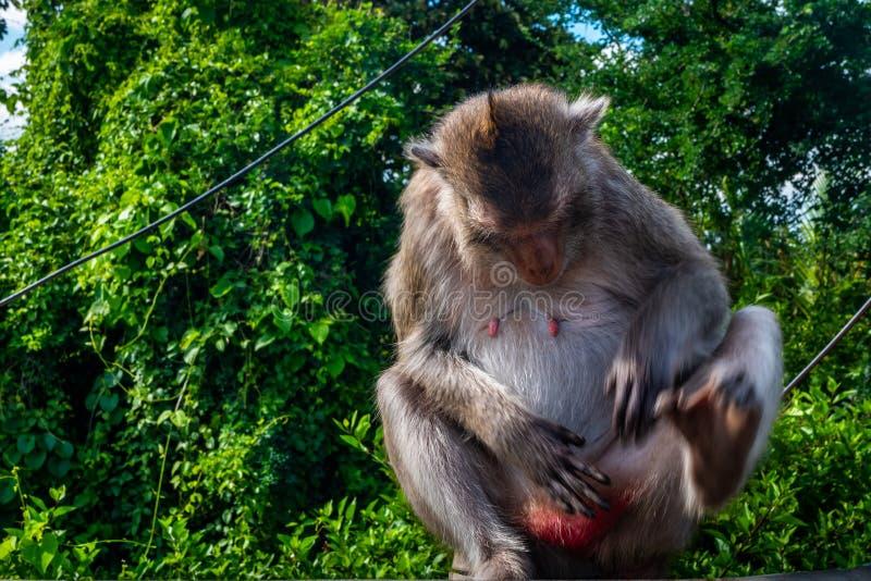 Mono que disfruta de la atmósfera fotografía de archivo