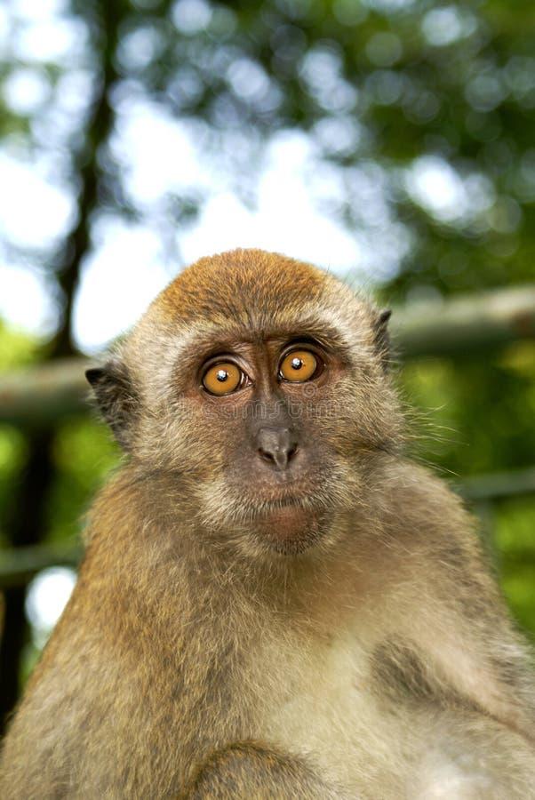 Mono que parece sobresaltado fotos de archivo