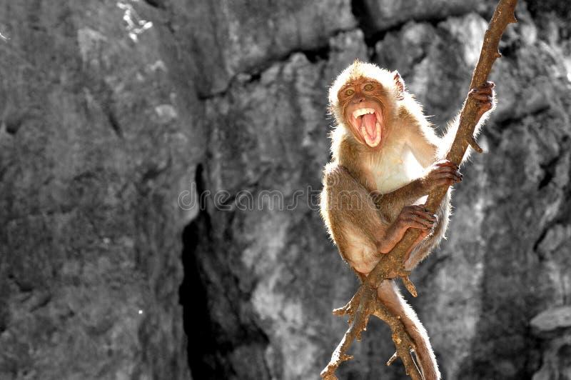 Mono que rabia y feroz en árbol fotografía de archivo