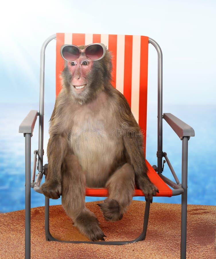 Mono que se relaja en una silla de playa fotografía de archivo libre de regalías