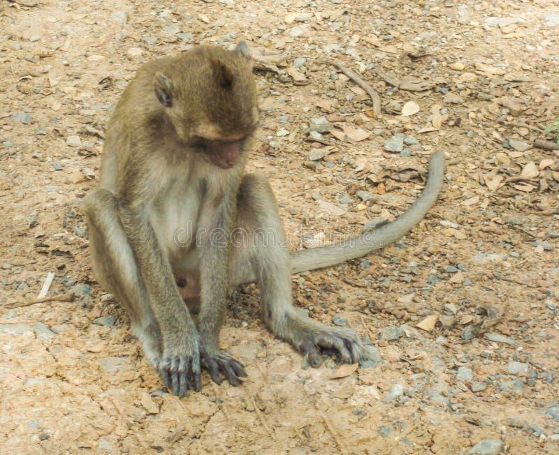 Mono que se sienta en el piso fotos de archivo libres de regalías