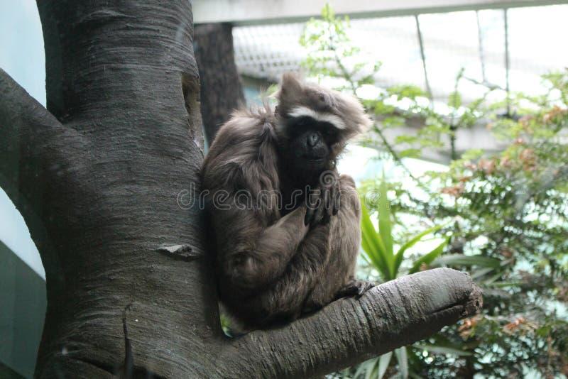 Mono que se sienta en un árbol imagenes de archivo