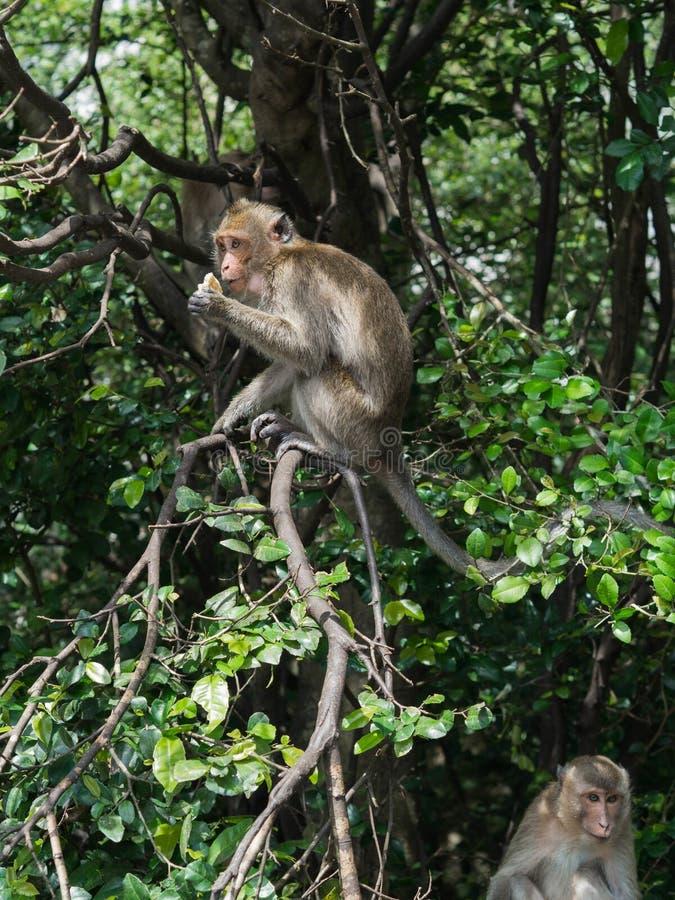 Mono salvaje en una rama de árbol imagenes de archivo