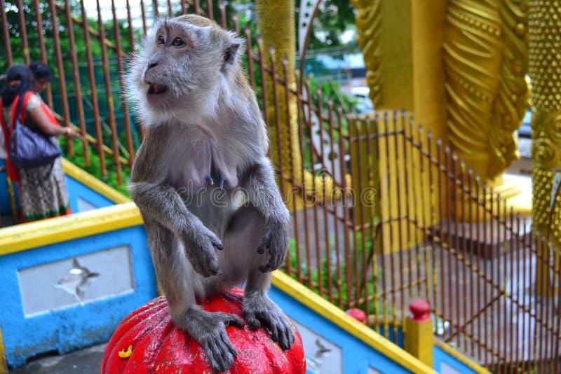 Mono sorprendido fotografía de archivo