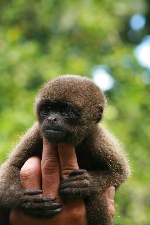 Mono y dedos imagen de archivo libre de regalías