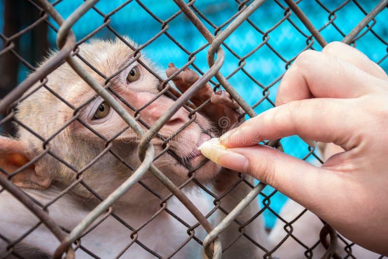 Mono y muchacha fotografía de archivo libre de regalías