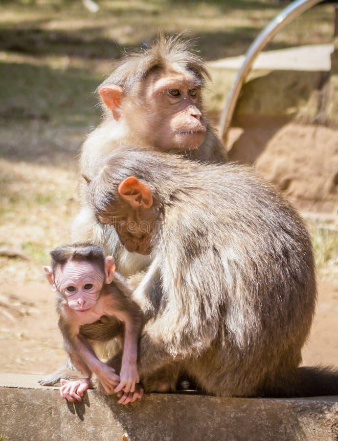 Mono y su familia foto de archivo