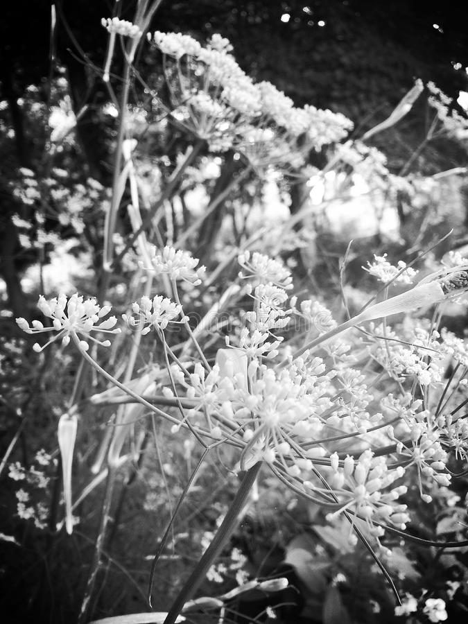 Monochomatic Summer Flowers stock image
