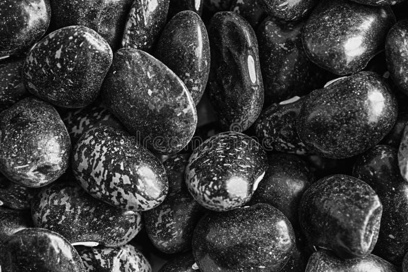 Monochrom trocknete braunes gesprenkeltes Konzept Bohnen der Niere der richtigen Nahrung und des gesunden Lebensstils Nahaufnahme stockfoto