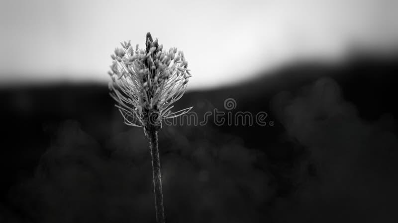 Monochromatic blomma fotografering för bildbyråer