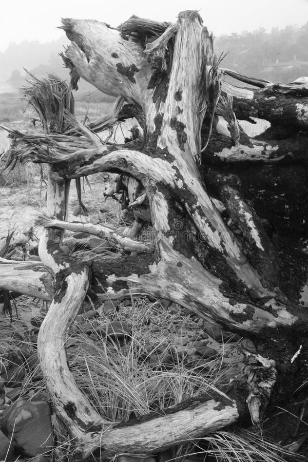 Monochromatische driftwood op Cape Meares, Oregon stock afbeeldingen