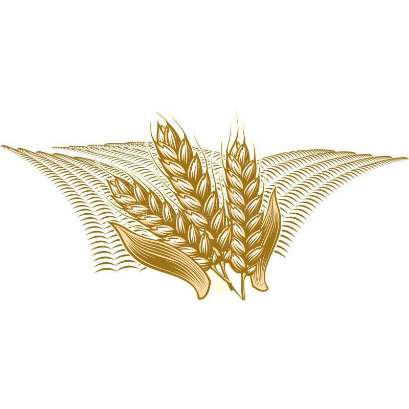 Monochrome винтажная иллюстрация гравировки зрелой пшеницы бесплатная иллюстрация