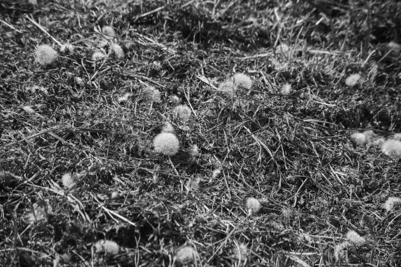 Monochrome поверхность плох-уравновешенной лужайки стоковая фотография