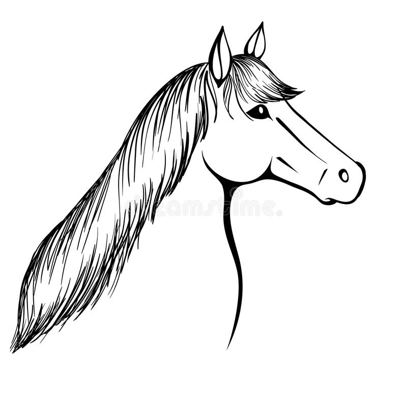 Download Monochrome Black-and-white Image Of A Horses Head. Stock Vector - Illustration: 34596217