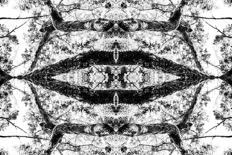 Monochrome d'abrégé sur chêne commun illustration de vecteur