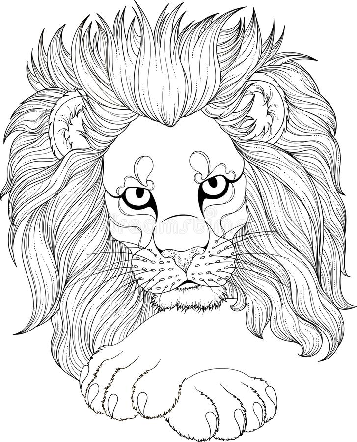 Monochrome drawing of lion for adult coloring pages. Stylized illustration of lion with beautiful eyes and big paws in tangle doodle style. Monochrome drawing of vector illustration
