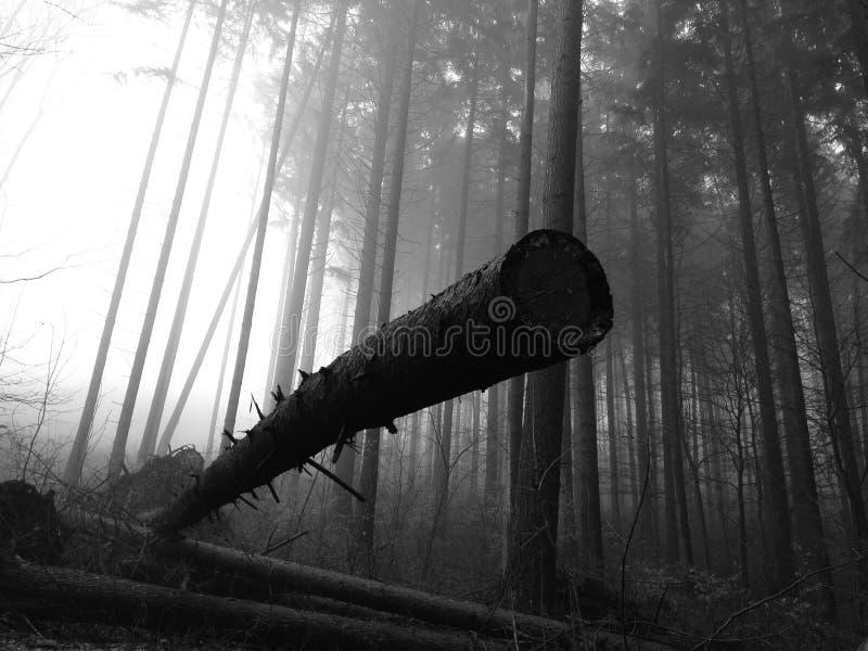 Monochrome fallen tree stock photos