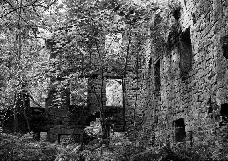 Monochrome image of the derelict mill in woodland royalty free stock image