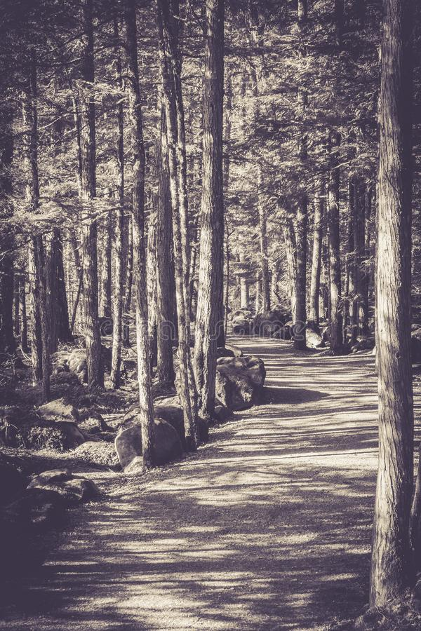 Monochrome pathway and trees stock image