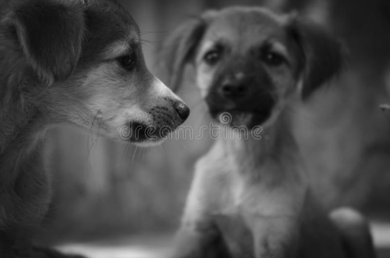 Monochrome portrait of cute puppies in an animal shelter stock image