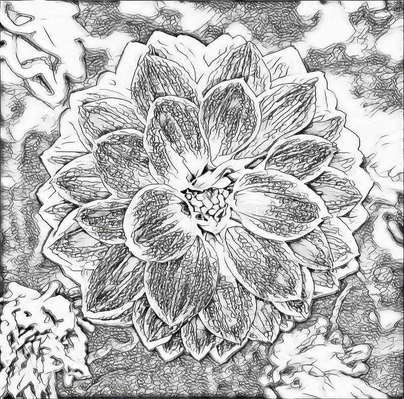 Monochrome sketch photographic art picture of nice symmetric garden flowers close up. Monochrome sketch photographic art picture of nice symmetric garden flowers vector illustration