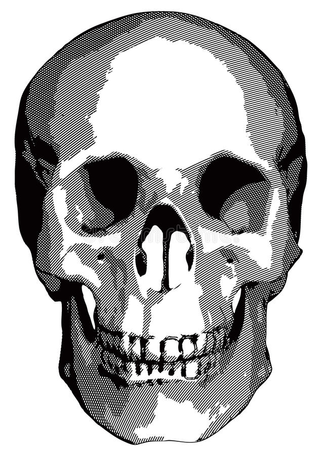 Download Monochrome Vector Graphics - Human Skull Stock Vector - Illustration of illustration, part: 25218769