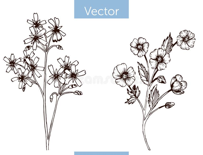 Monochrome vector hand drawn wildflowers on white background royalty free illustration