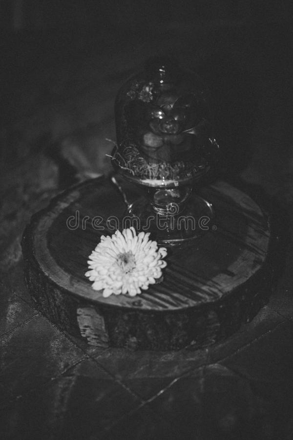 Monochrome vertical shot of a flower and a serving stand with dome on a round wooden surface. A monochrome vertical shot of a flower and a serving stand with royalty free stock photography
