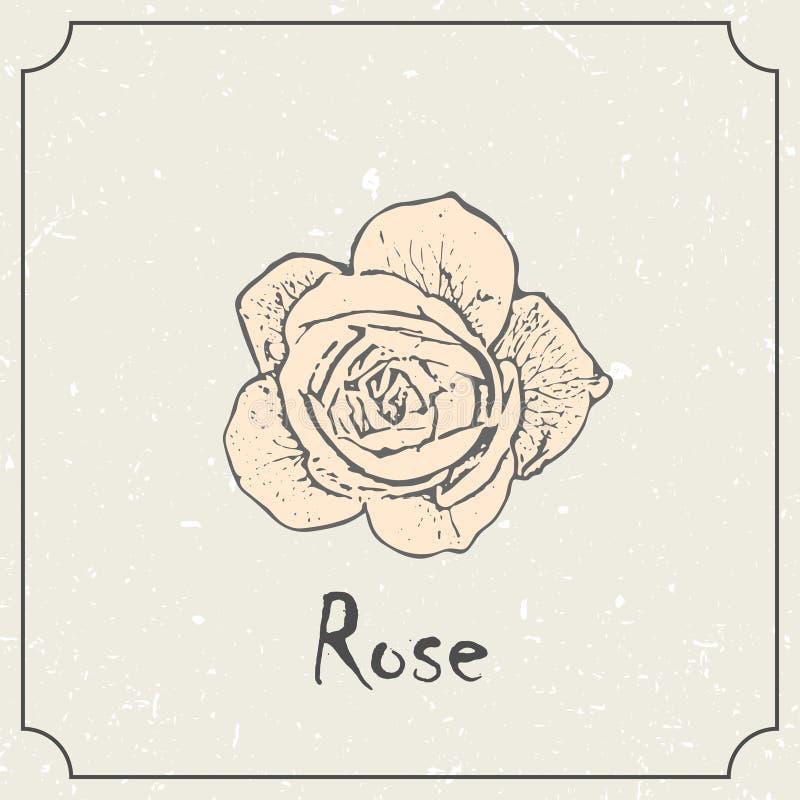 Monochromrosenblume Weinleseschmutzheirat-Designschablone, Blumengrafik Vektorillustration des Sommerkonzeptes lizenzfreie abbildung