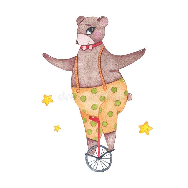 Monociclo sveglio di guida dell'orso dell'animale da circo dell'acquerello isolato su fondo bianco illustrazione vettoriale