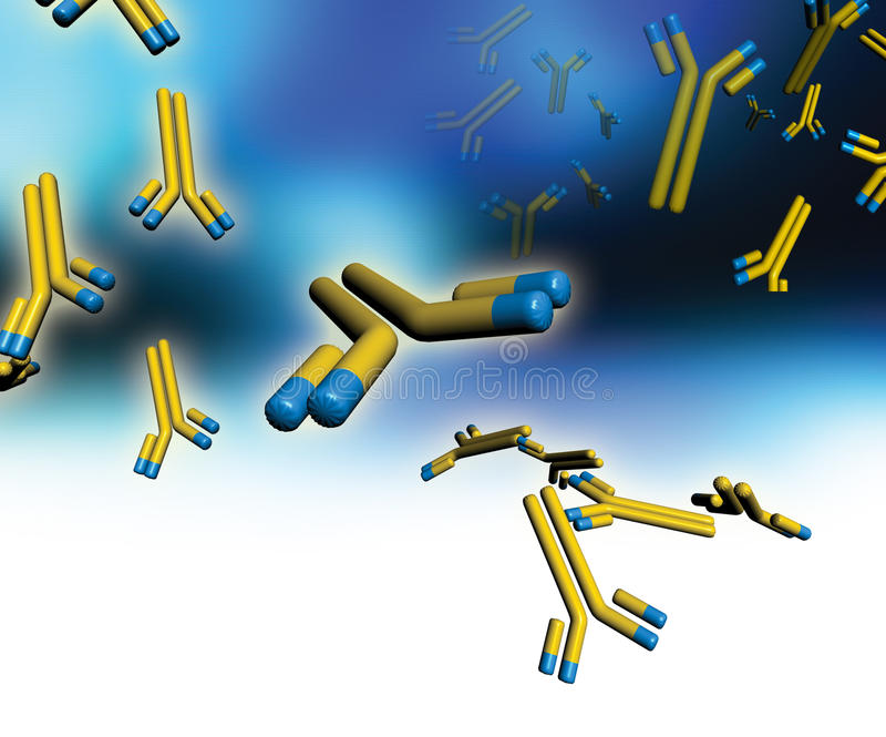 Monoclonal antibodies. Computer artwork of . These Y-shaped antibodies are engineered to be identical and specific to only one type of antigen on the surface