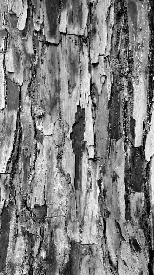 Monocrome av det flakey texturerade trädskället arkivfoton
